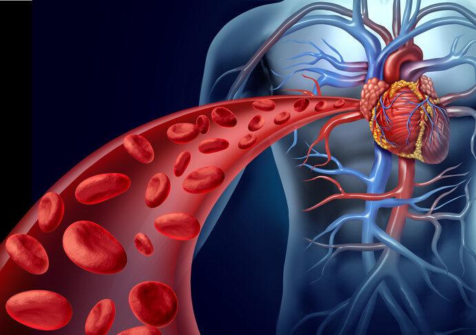 globuli rossi artificiali sangue sistema cardiocircolatorio tumore