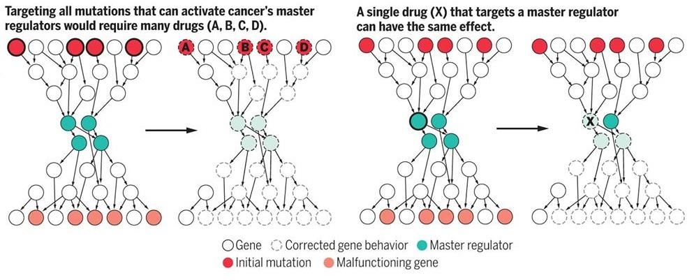 Algoritmi cellule tumorali