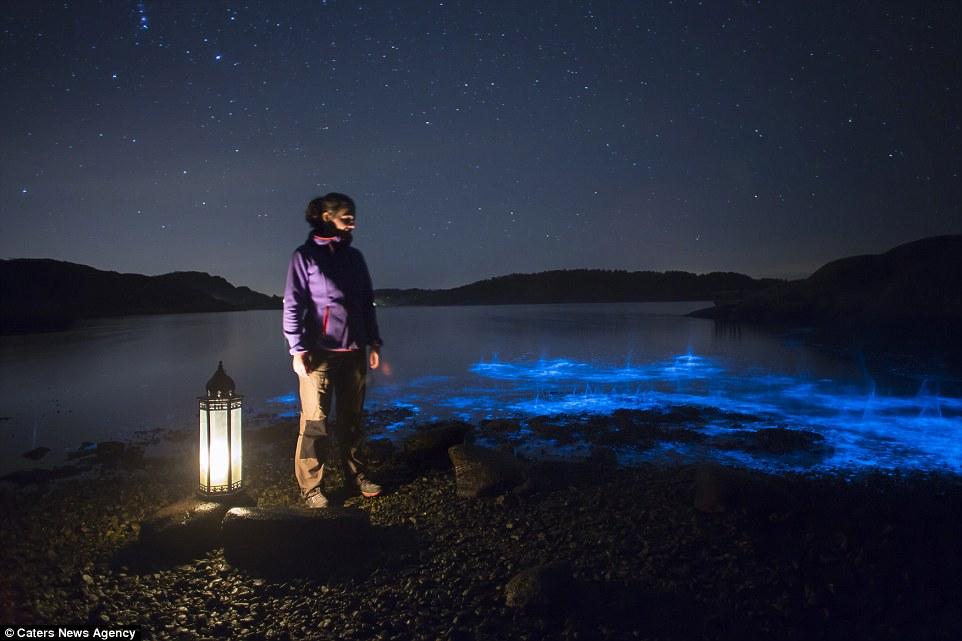 Bioluminescenza Svezia