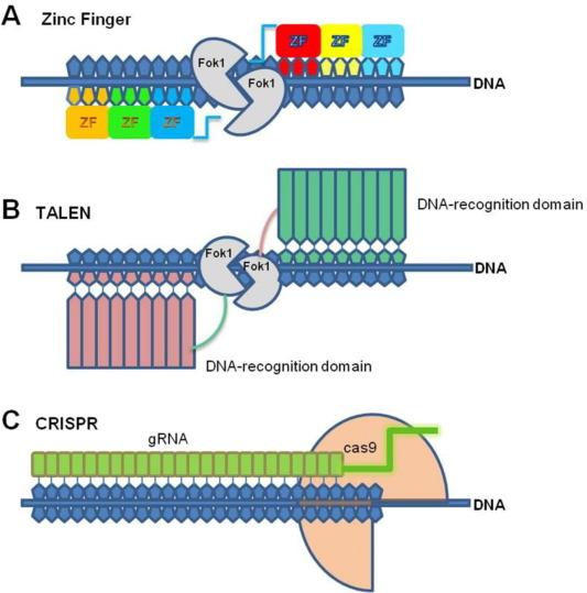 È finalmente Nobel per la Chimica alle pioniere di CRISPR-Cas9. Credits: Elsevier