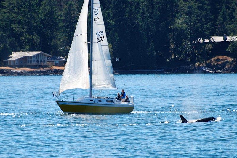 Orche barche a vela