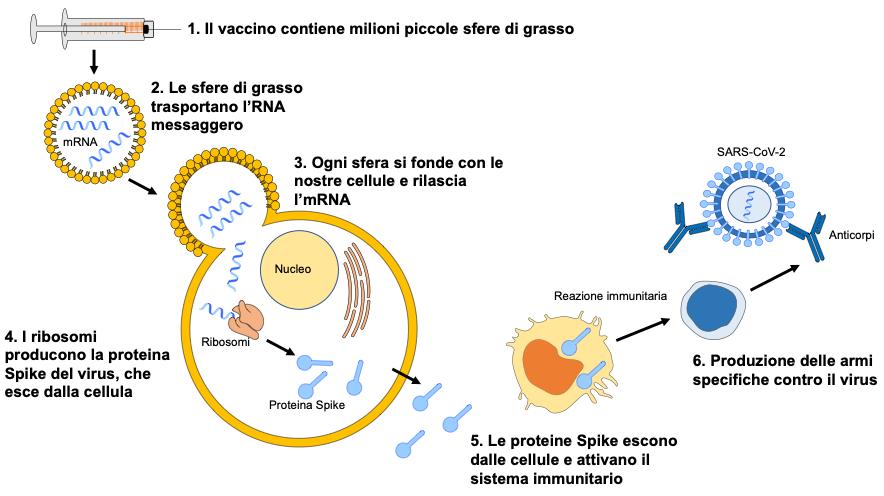 Vaccino anti COVID-19: Comirnaty, speranza e fiducia sono la chiave. Credits: Ospedale Pediatrico Bambino Gesù (Roma)