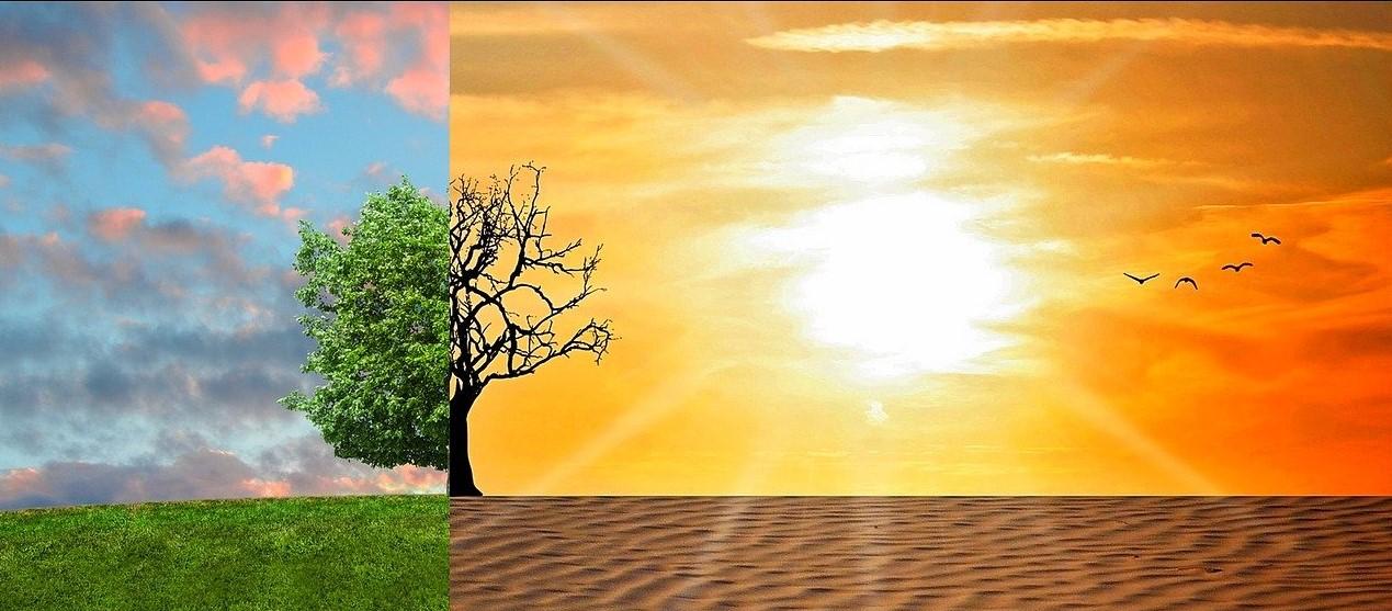 Riscaldamento globale: il 2020 è stato il secondo anno più caldo di sempre