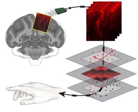 Interfacce cervello-macchina (BMI) basate su tecnologia a ultrasuoni. Credits: Caltech