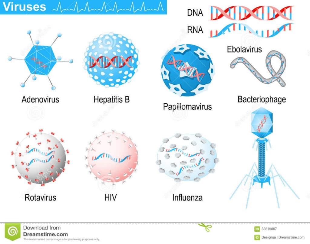 Adenovirus: cosa sono, cosa provocano e come sono utilizzati in clinica
