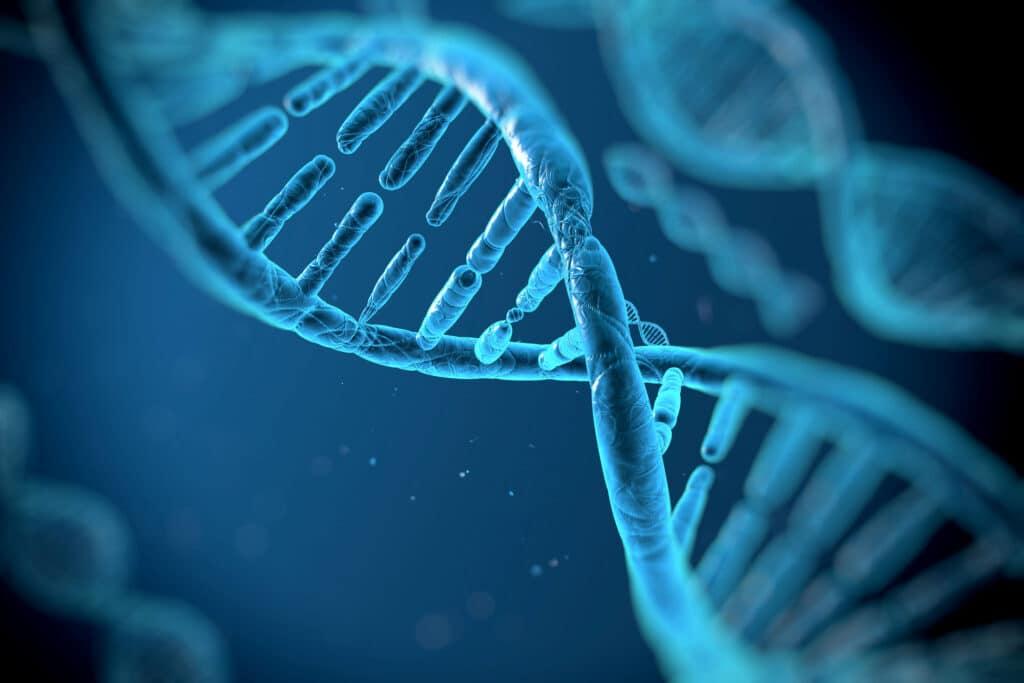 Epigenetica -DNA