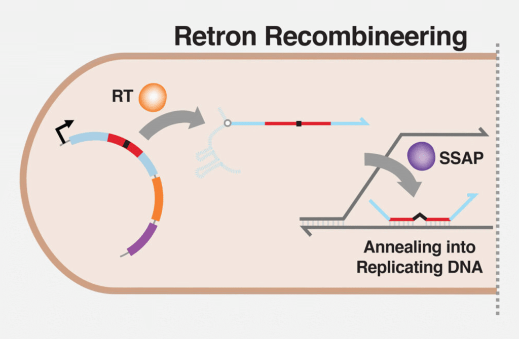 gene editing RLR