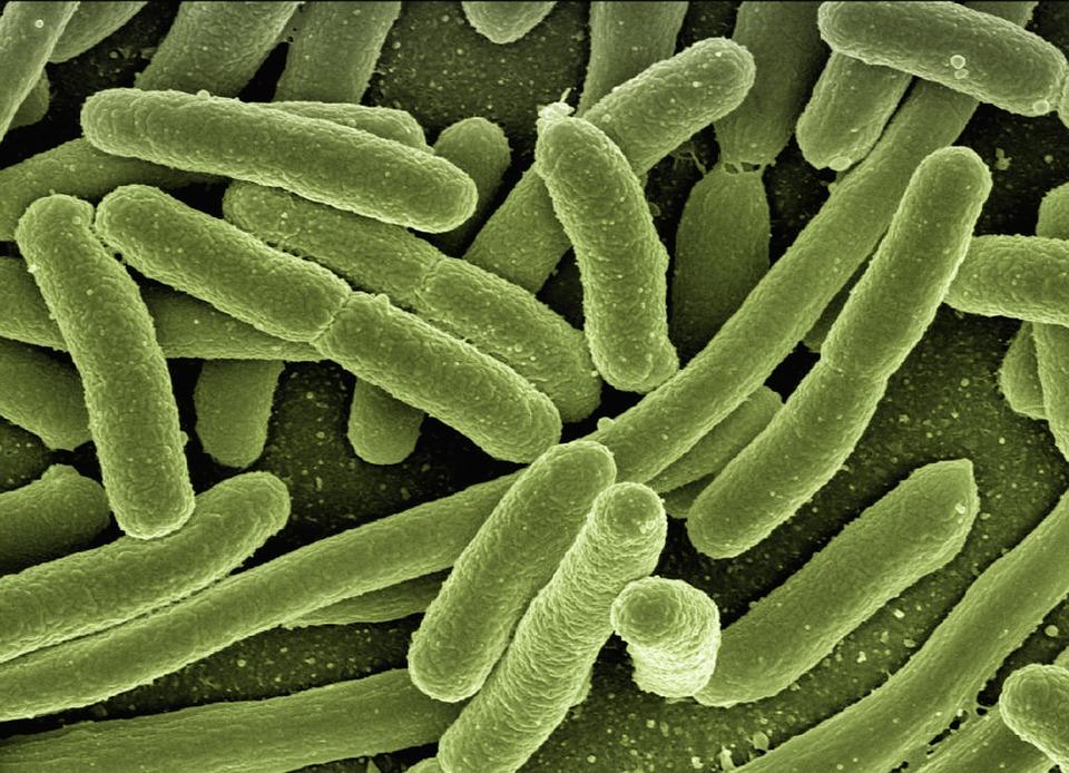 microbiota cos'è