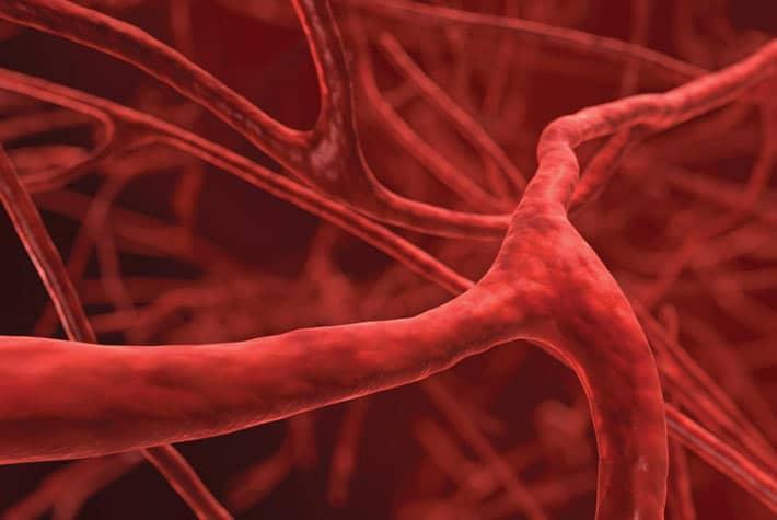 Le noci: un ottimo alleato contro malattie cardiovascolari e ictus